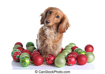 Christmas dog - Dachshund surrounded by Christmas ornaments.