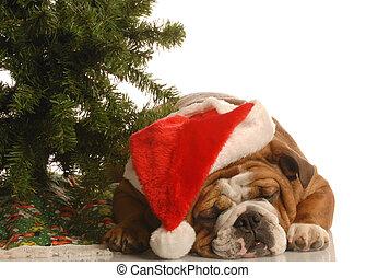 english bulldog wearing santa hat sleeping under christmas tree