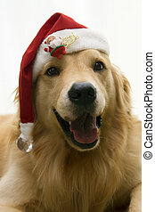 close up photo of cute doggy wearing santa hat on white background