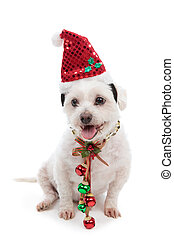 Christmas dog with jingle bells - Christmas pooch wearing a...