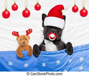 christmas dog with teddy bear sleeping