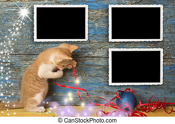 Christmas empty photo frames funny cat