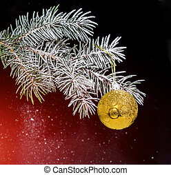Christmas evergreen spruce tree with snow and gold glass ball.