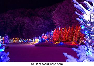 Christmas fantasy - chrismas trees in lights