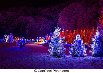 Christmas fantasy - pine trees in x-mas lights - christmas...