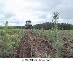 Christmas fir saplings and tractor