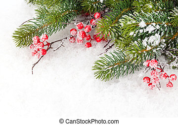 Christmas fir tree branch with holly berry