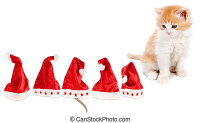 Christmas game - Little kitten trying to guess where the ...