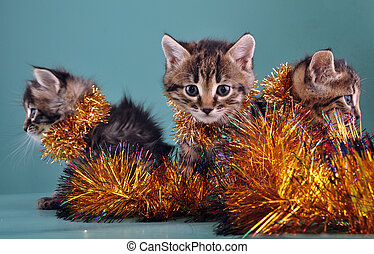 Christmas group portrait of kittens