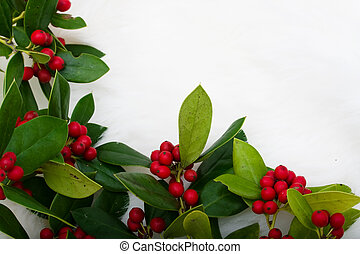 Christmas Holly Border - Holly and berries making a border ...