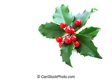 Christmas Holly - Christmas holly leaves and berries ...