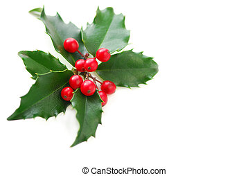 Christmas Holly - Christmas holly leaves and berries...