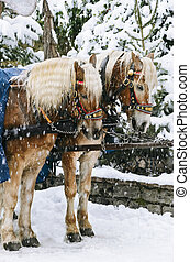 Christmas Horses - Two Horses In The Harness Under The Snow
