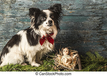 Christmas Jesus and dog