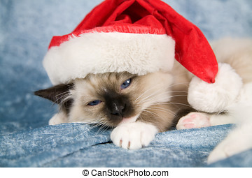 Christmas kitten - Cute little kitten looking quite unhappy ...
