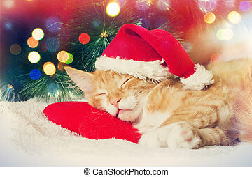 Christmas kitten sleeping