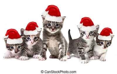 Christmas Kittens Wearing Red Hat on White - Adorable...