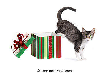 Christmas Kitty in a Gift Box