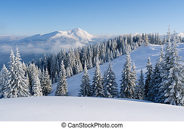 Christmas landscape with spruce in the mountains - Christmas...
