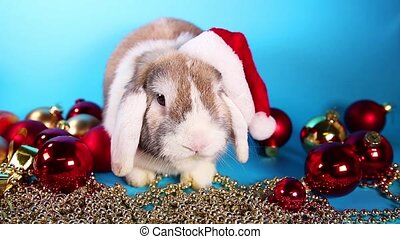 Christmas lop rabbit bunny with santa hat.