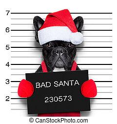 christmas mugshot - mugshot of a christmas santa bad dog