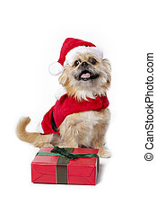 christmas outfit on cute pet
