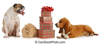 christmas pets - christmas pet - two dogs and a cat sitting...