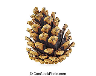 Christmas pine cone isolated on a white background