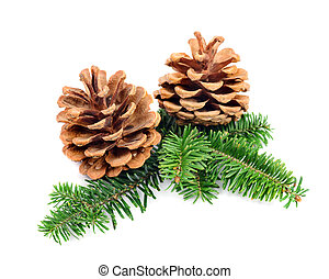Christmas pine cones with branch on a white background. ...
