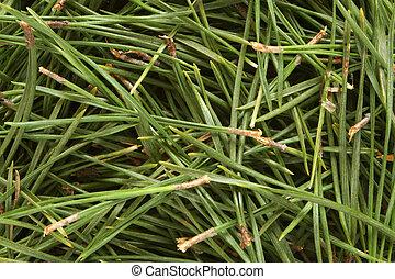 Christmas pine texture