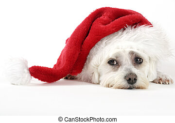 Christmas pooch resting with a santa hat