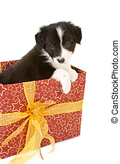 Christmas present puppy