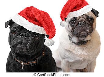 Christmas Pugs - Black and Fawn colored Pugs with christmas...