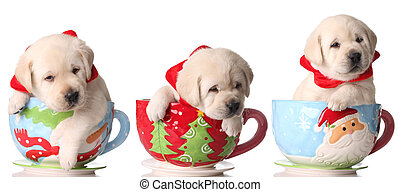 Three yellow lab puppies in Christmas tea cups.