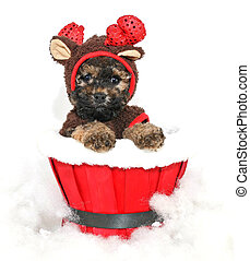 Christmas Puppy - Cute little puppy dressed up in a reindeer...