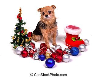Christmas puppy with colorful decorations