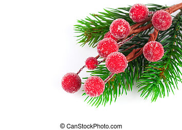 Christmas red berries with copy space, on  on white background