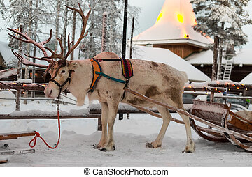 Christmas reindeer in the village of Santa Claus. Finland. ...