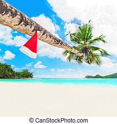 Christmas Santa hat on palm tree at tropical ocean beach