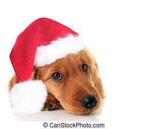 Christmas Santa puppy