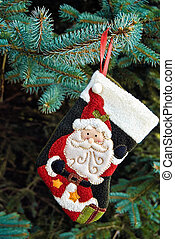 Christmas Santa stocking on pine branch