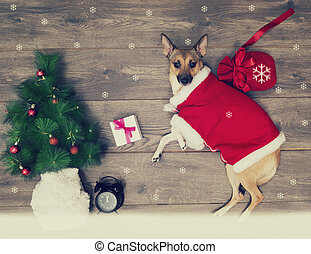 Christmas set, dog