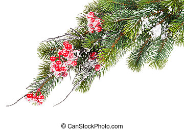 Christmas snow fir tree with holly berry