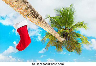 Christmas sock on palm tree at exotic tropical beach against blu