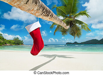 Christmas sock on palm tree at exotic tropical beach. ...