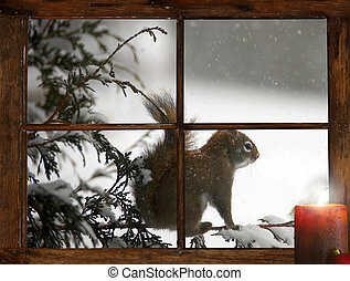 Christmas Squirrel. - Poor little squirrel perched on a...
