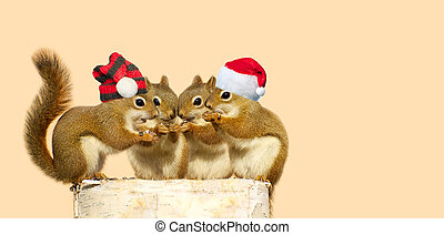 Christmas squirrels. - A group of young squirrels on a birch...