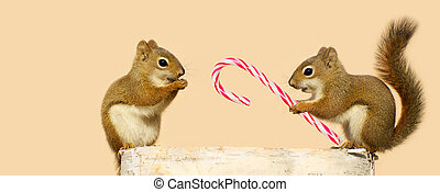 Christmas squirrels.