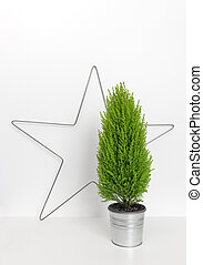 Christmas star and little green tree