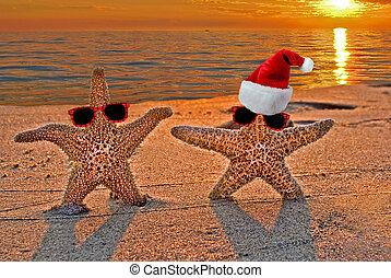 Christmas starfish on sunset beach